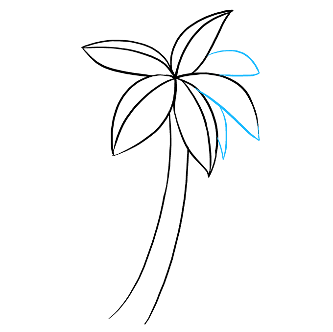 Cách vẽ cây cọ: Bước 5