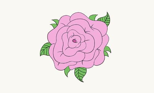 Hướng dẫn vẽ: Cách vẽ hoa hồng