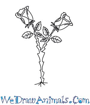 Hướng dẫn vẽ: Cách vẽ cây hoa hồng