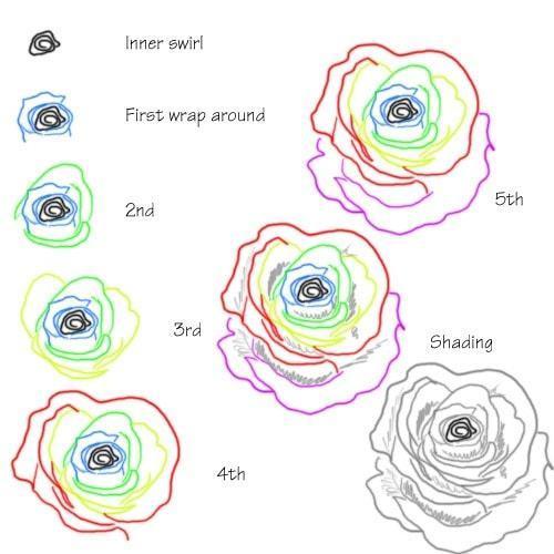 Hướng dẫn vẽ: Cách vẽ hoa hồng bằng cách sử dụng các đường uốn lượn