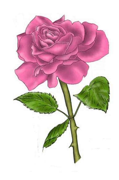Hướng dẫn vẽ: Cách vẽ hoa hồng bằng cách sử dụng các đường lưới hình tam giác