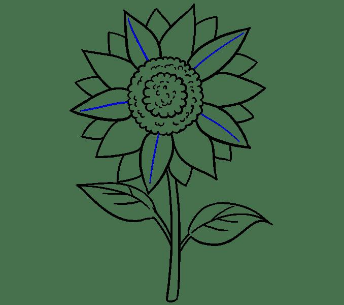 Cách vẽ hoa hướng dương: Bước 18