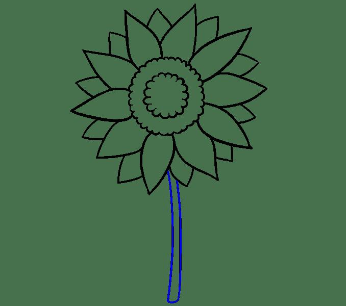 Cách vẽ hoa hướng dương: Bước 7