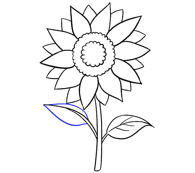 Cách vẽ hoa hướng dương: Bước 14