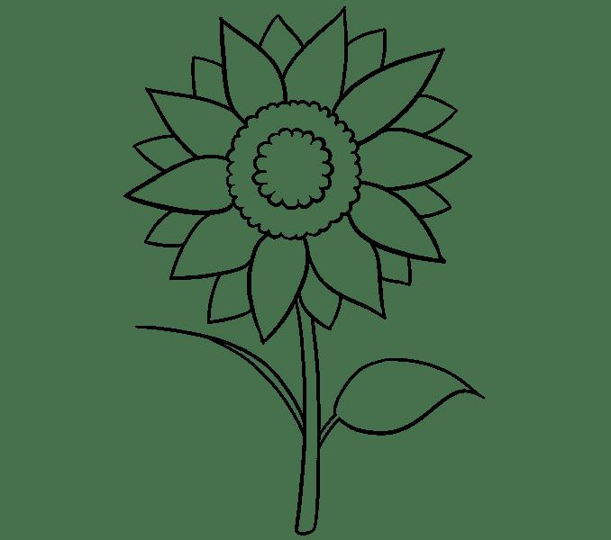 Cách vẽ hoa hướng dương: Bước 12