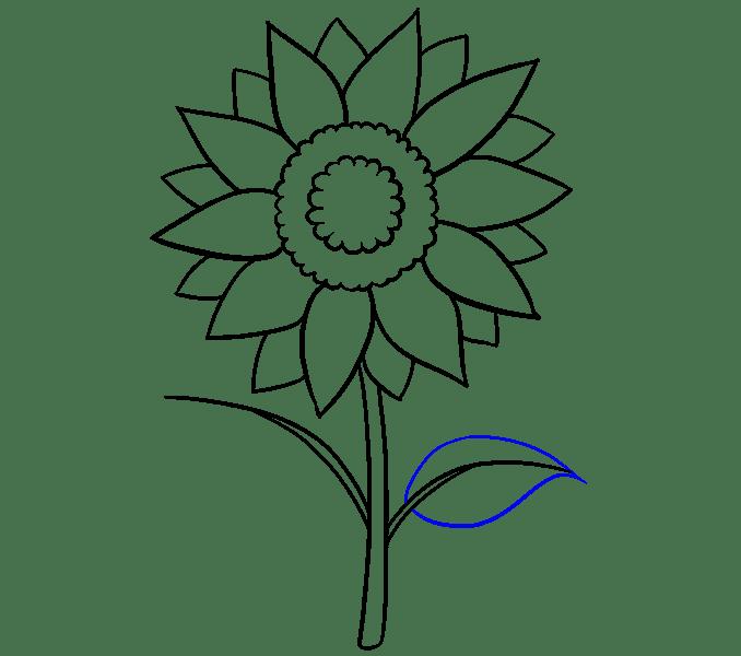 Cách vẽ hoa hướng dương: Bước 11