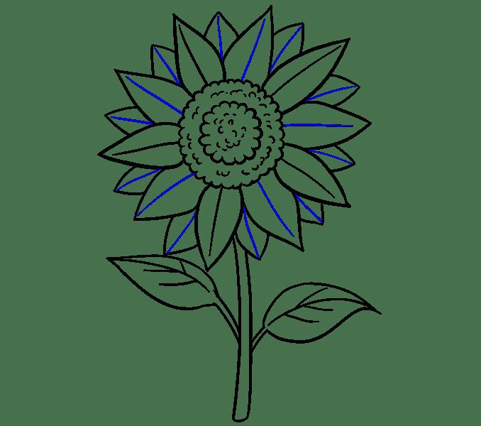 Cách vẽ hoa hướng dương: Bước 19
