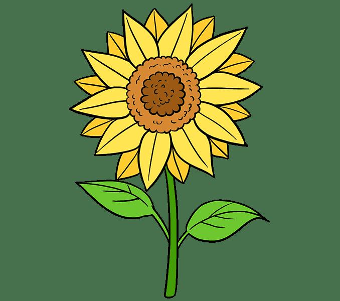 Cách vẽ hoa hướng dương: Bước 20