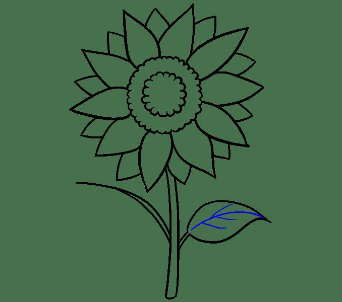 Cách vẽ hoa hướng dương: Bước 13
