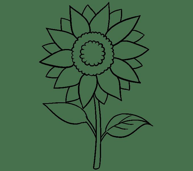 Cách vẽ hoa hướng dương: Bước 15