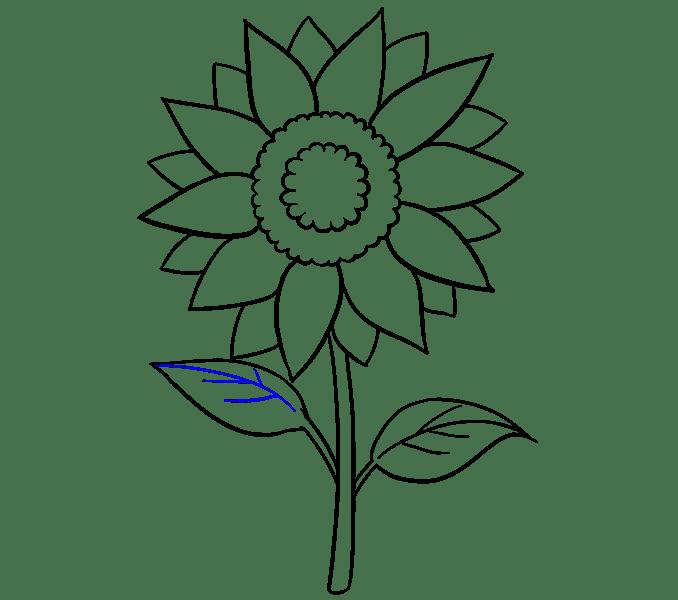 Cách vẽ hoa hướng dương: Bước 16