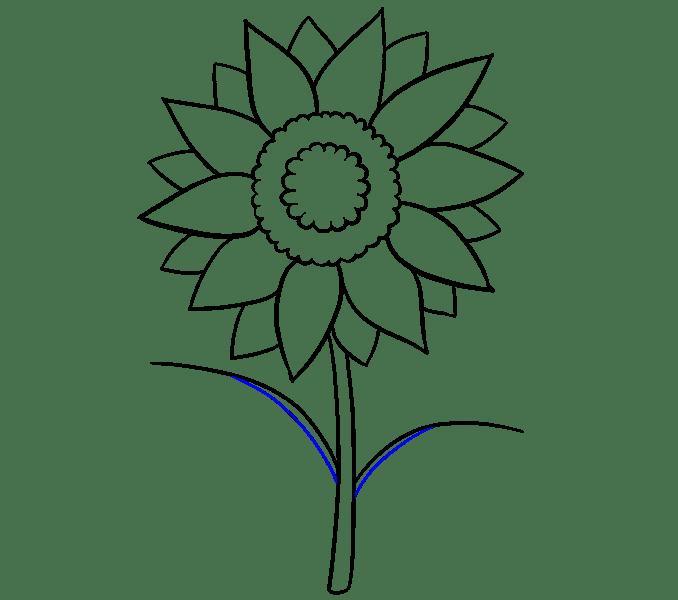 Cách vẽ hoa hướng dương: Bước 10