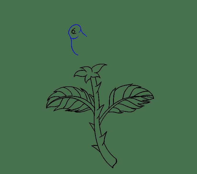 Cách vẽ hoa hồng bằng thân cây: Bước 13