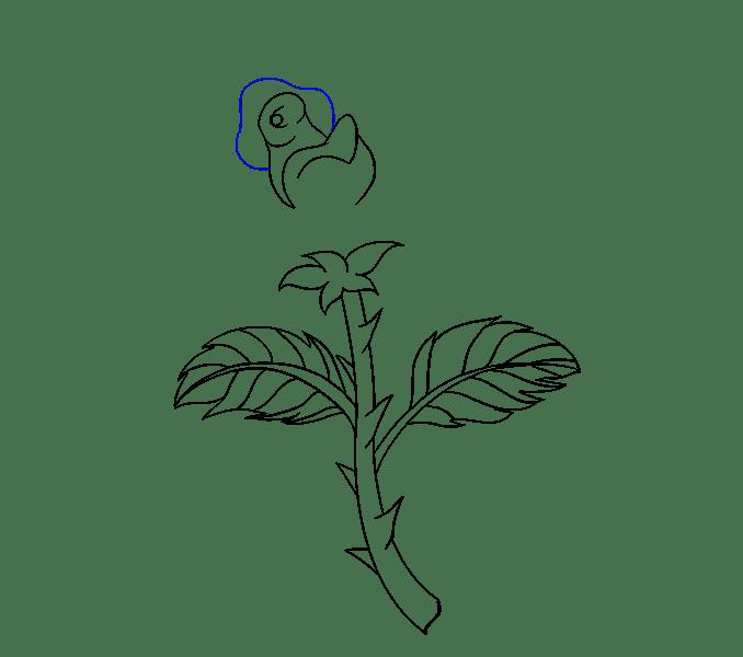 Cách vẽ hoa hồng bằng thân cây: Bước 15