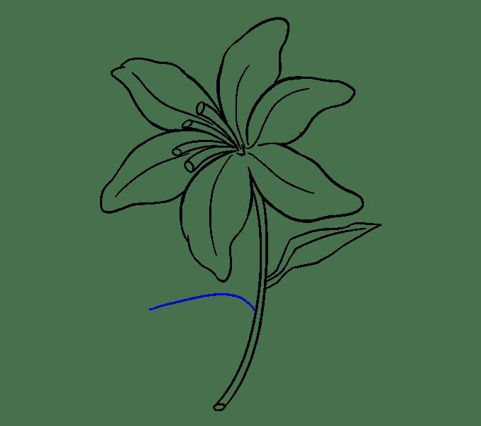 Cách vẽ Lily: Bước 17