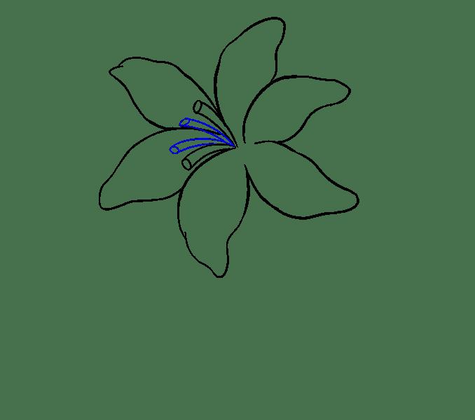 Cách vẽ Lily: Bước 11