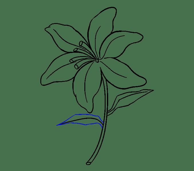 Cách vẽ Lily: Bước 18