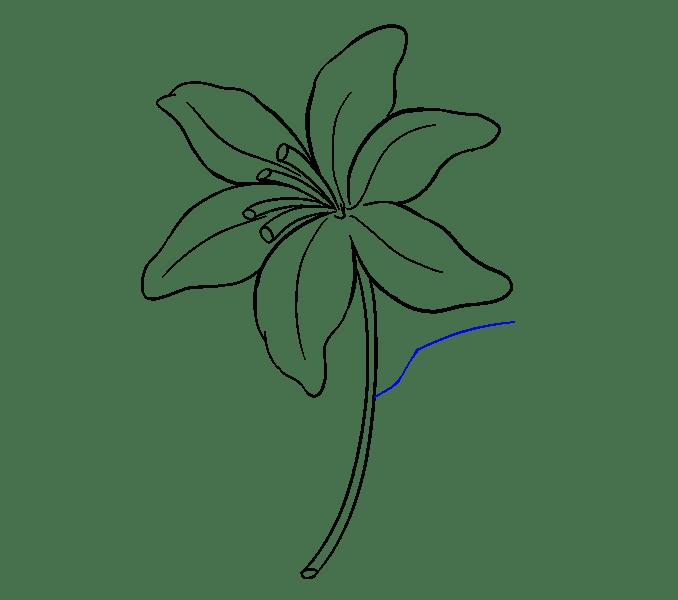 Cách vẽ Lily: Bước 15