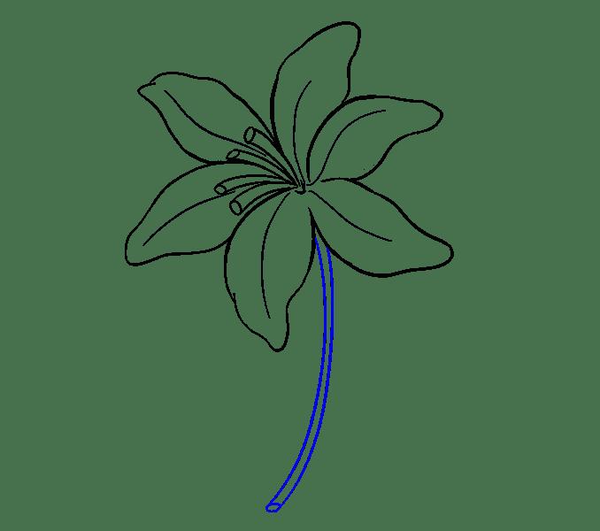 Cách vẽ Lily: Bước 14