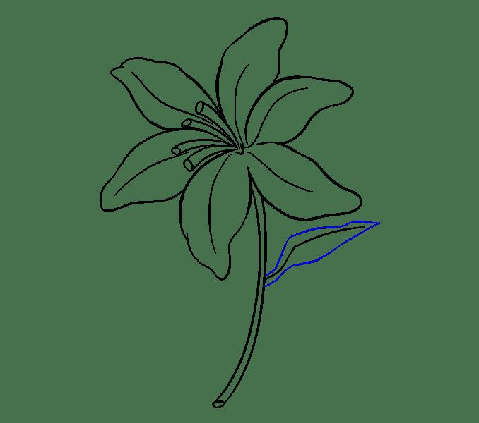 Cách vẽ Lily: Bước 16