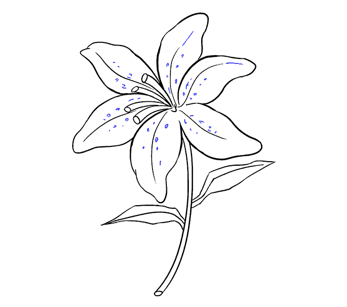 Cách vẽ Lily: Bước 19