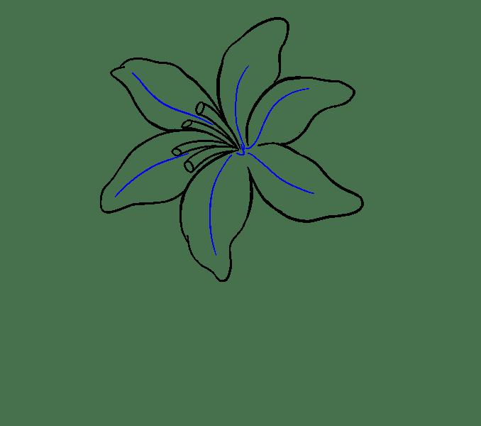 Cách vẽ Lily: Bước 13