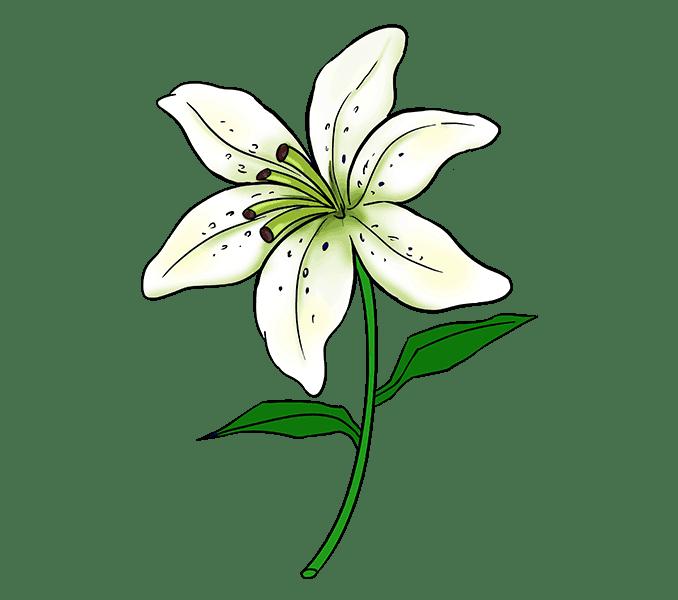Cách vẽ Lily: Bước 20