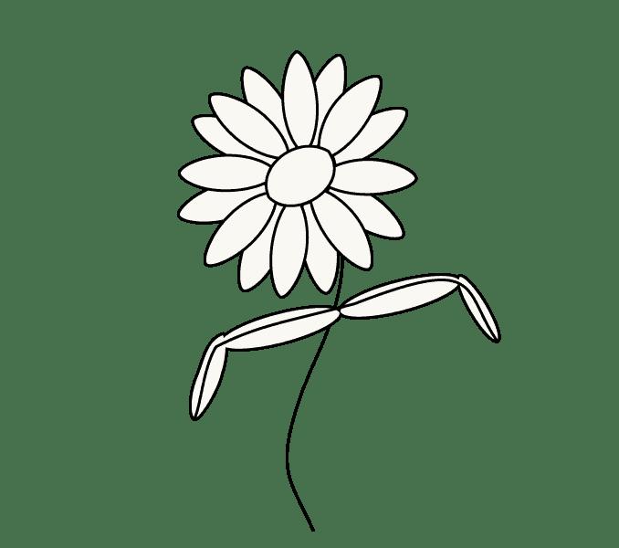 Cách vẽ hoa cúc: Bước 7