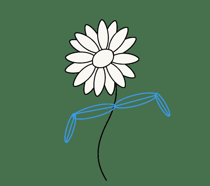 Cách vẽ hoa cúc: Bước 6
