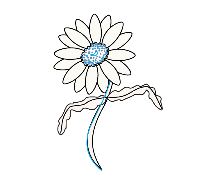 Cách vẽ hoa cúc: Bước 10