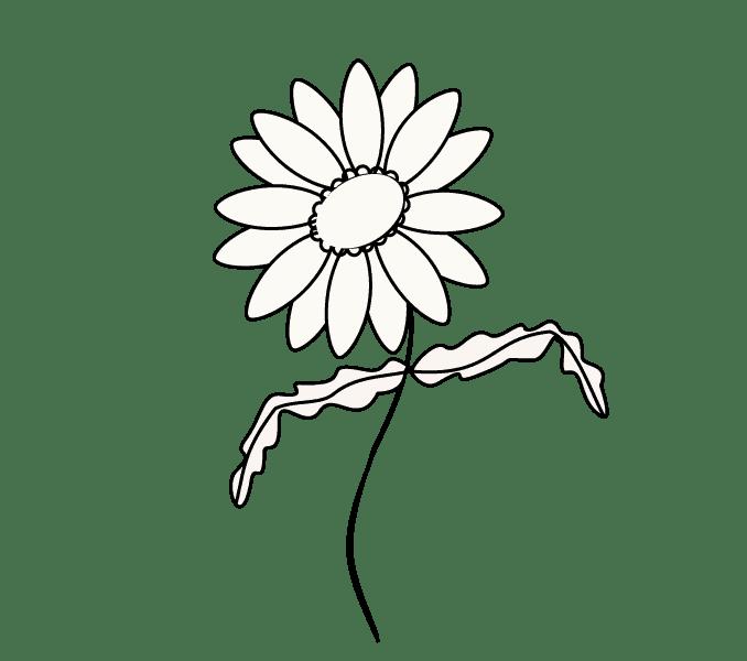Cách vẽ hoa cúc: Bước 9