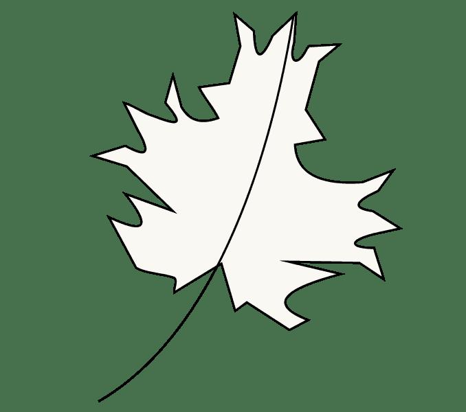 Cách vẽ lá phong: Bước 8