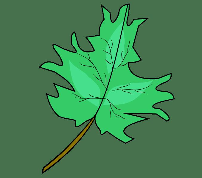 Cách vẽ lá phong: Bước 10