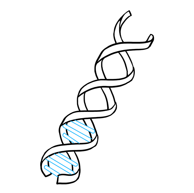 Cách vẽ DNA: Bước 6