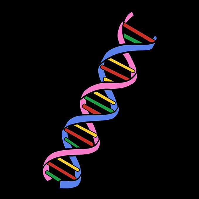 Cách vẽ DNA: Bước 10