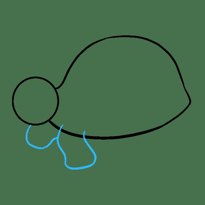 Cách vẽ rùa biển: Bước 4