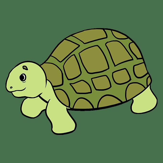 Cách vẽ rùa biển: Bước 10