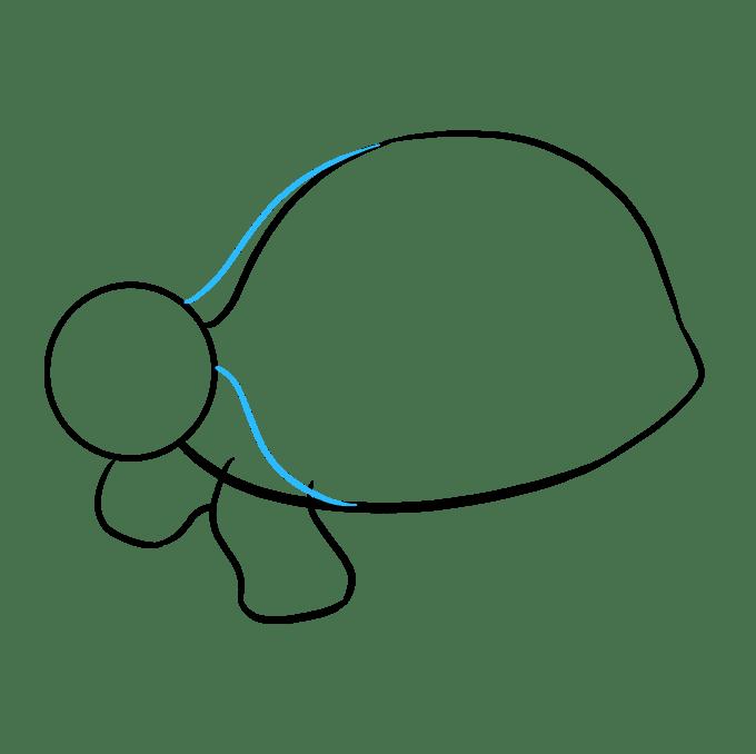 Cách vẽ rùa biển: Bước 5