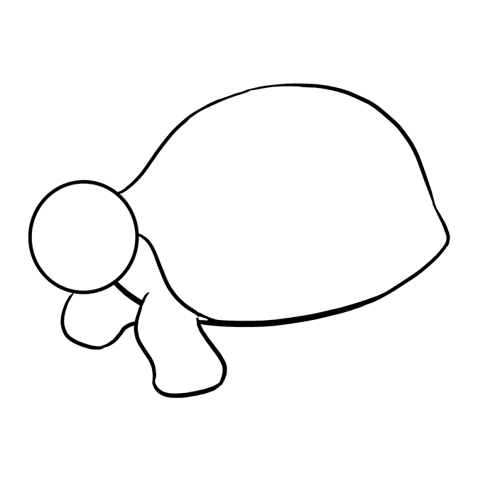 Cách vẽ rùa biển: Bước 6