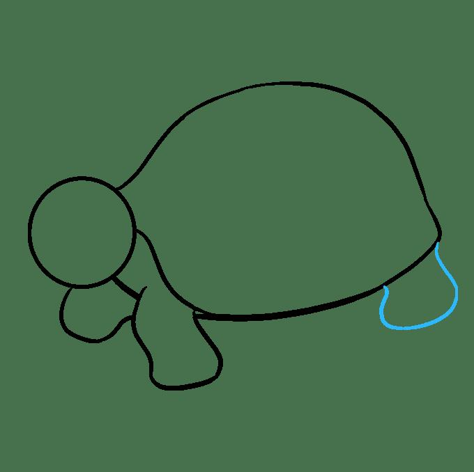Cách vẽ rùa biển: Bước 7