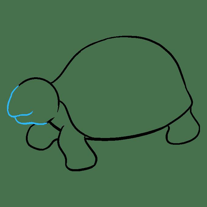 Cách vẽ rùa biển: Bước 8