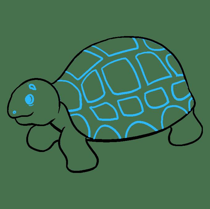 Cách vẽ rùa biển: Bước 9