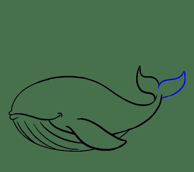 Cách vẽ cá voi: Bước 14