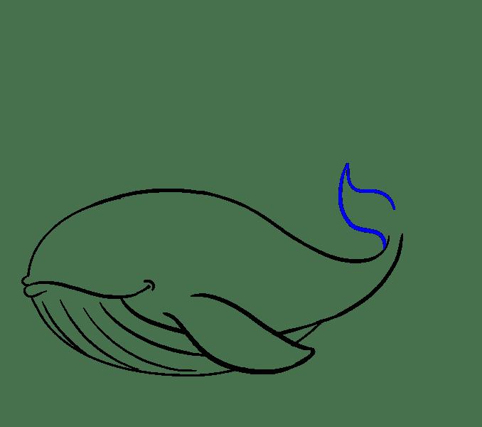 Cách vẽ cá voi: Bước 13