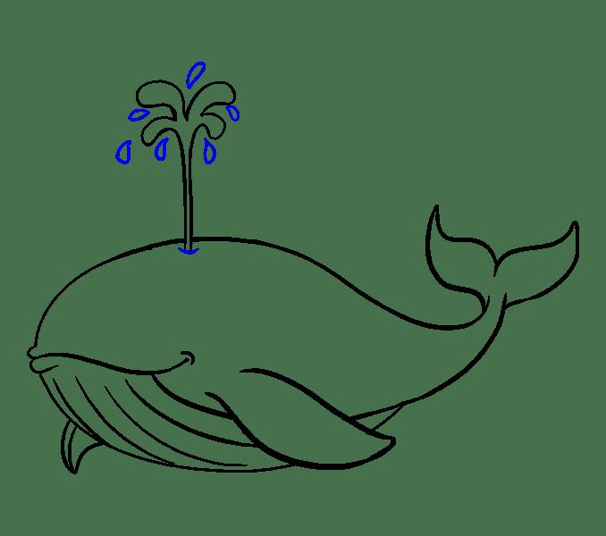Cách vẽ cá voi: Bước 17
