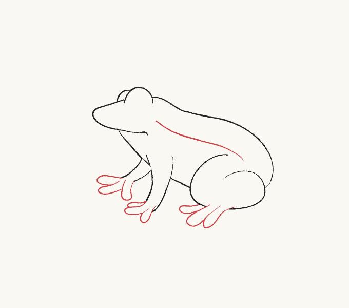 Cách vẽ ếch: Bước 5