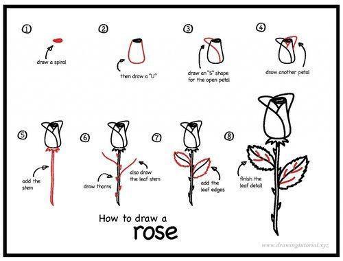 Hướng dẫn vẽ: Cách vẽ hoa hồng trong tám bước đơn giản